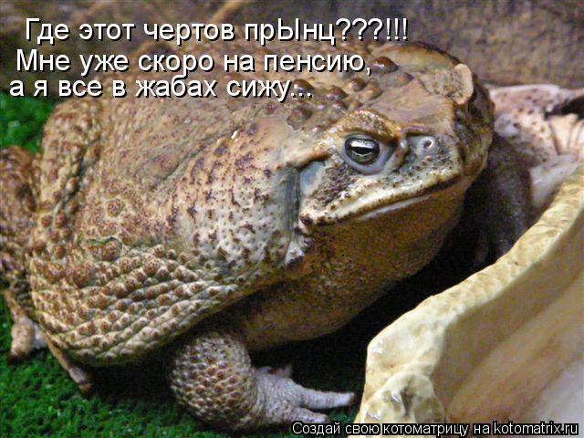 Котоматрица: Где этот чертов прЫнц???!!! Мне уже скоро на пенсию,  а я все в жабах сижу...