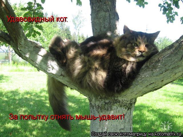 Котоматрица: Удавовидный кот. За попытку отнять мышь-удавит!