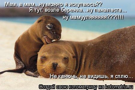 Котоматрица: Мам, а мам...ну можно я искупаюсь?? Я тут, возле бережка...ну пажаласта... ну мамууляяяяяя???!!!! Не канючь, не видишь, я сплю...