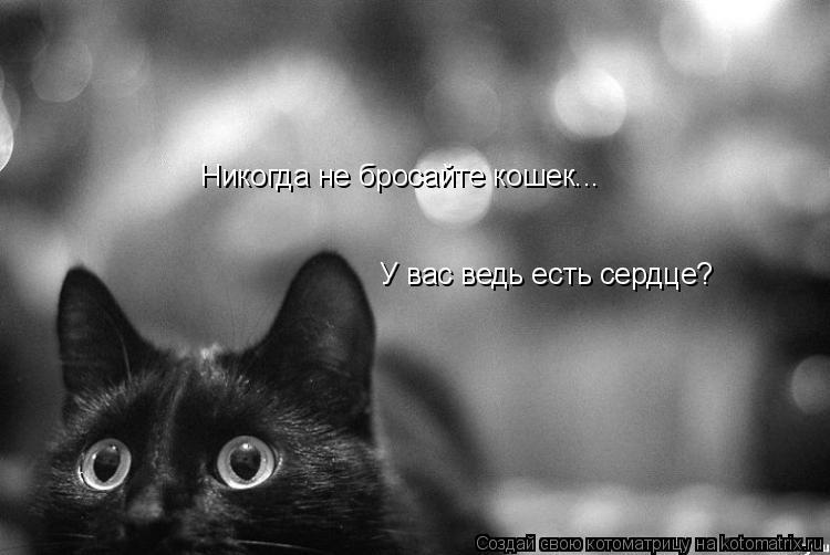 Котоматрица: Никогда не бросайте кошек... У вас ведь есть сердце?