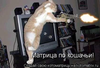 Котоматрица: Матрица по кошачьи!