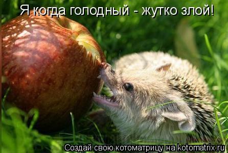 Котоматрица: Я когда голодный - жутко злой!