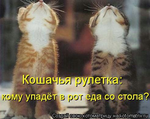 Котоматрица: Кошачья рулетка: кому упадёт в рот еда со стола?