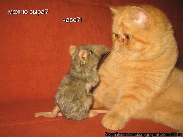 Котоматрица: -можно сыра? -чаво?!
