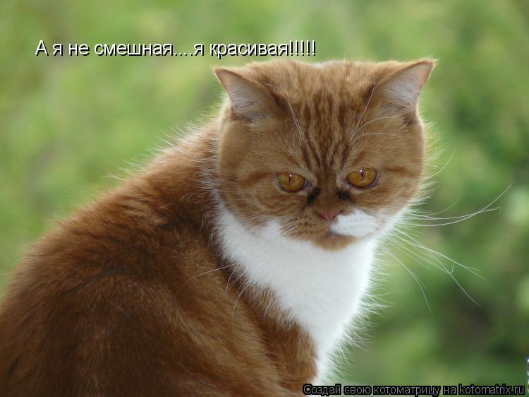 Котоматрица: А я не смешная....я красивая!!!!!