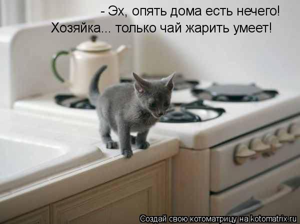 Котоматрица: - Эх, опять дома есть нечего! Хозяйка... только чай жарить умеет!