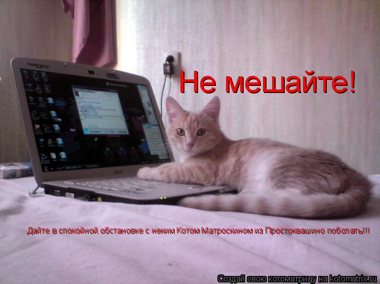 Котоматрица: Не мешайте!  Дайте в спокойной обстановке с неким Котом Матроскином из Простоквашино поболать!!!