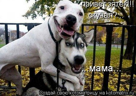 Котоматрица: привет,зятек!!! скучал?... ...мама...
