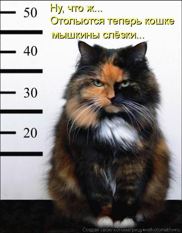 Котоматрица: Ну, что ж... Отольются теперь кошке мышкины слёзки...