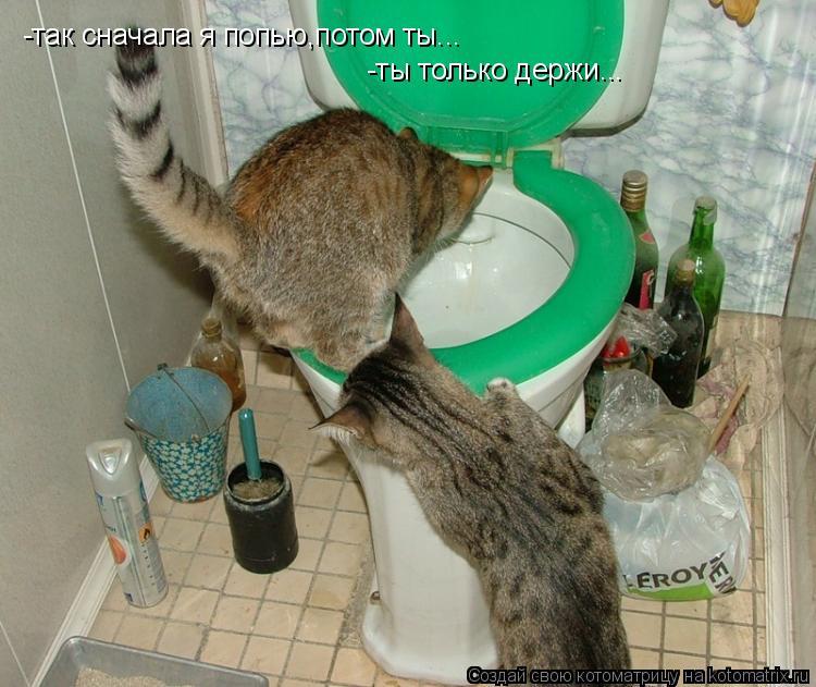 Котоматрица: -так сначала я попью,потом ты... -ты только держи...