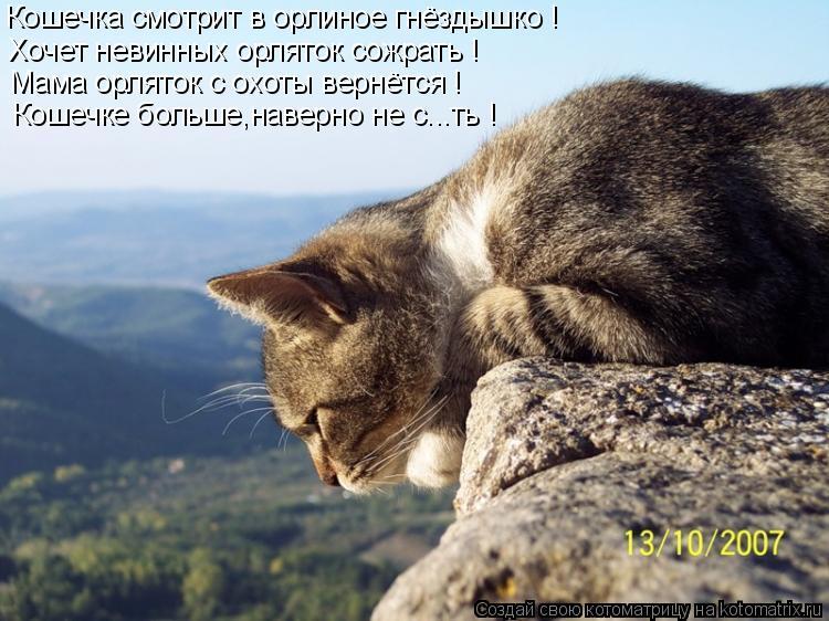 Котоматрица: Кошечка смотрит в орлиное гнёздышко ! Хочет невинных орляток сожрать ! Мама орляток с охоты вернётся ! Кошечке больше,наверно не с...ть !
