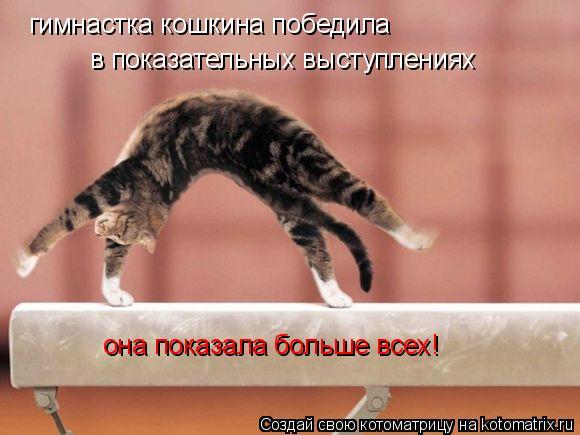 Котоматрица: гимнастка кошкина победила в показательных выступлениях она показала больше всех!