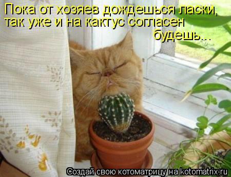 Котоматрица: Пока от хозяев дождешься ласки, так уже и на кактус согласен будешь...