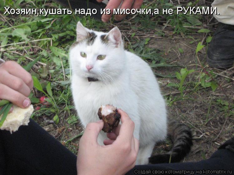 Котоматрица: Хозяин,кушать надо из мисочки,а не РУКАМИ.