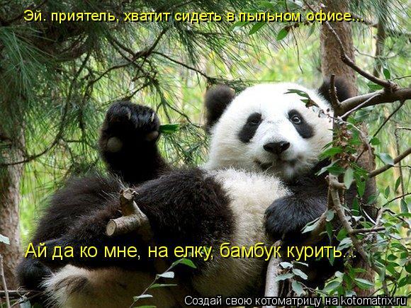 Котоматрица: Эй. приятель, хватит сидеть в пыльном офисе... Ай да ко мне, на елку, бамбук курить...