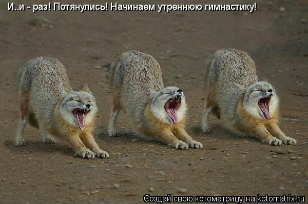 Котоматрица: И..и - раз! Потянулись! Начинаем утреннюю гимнастику!