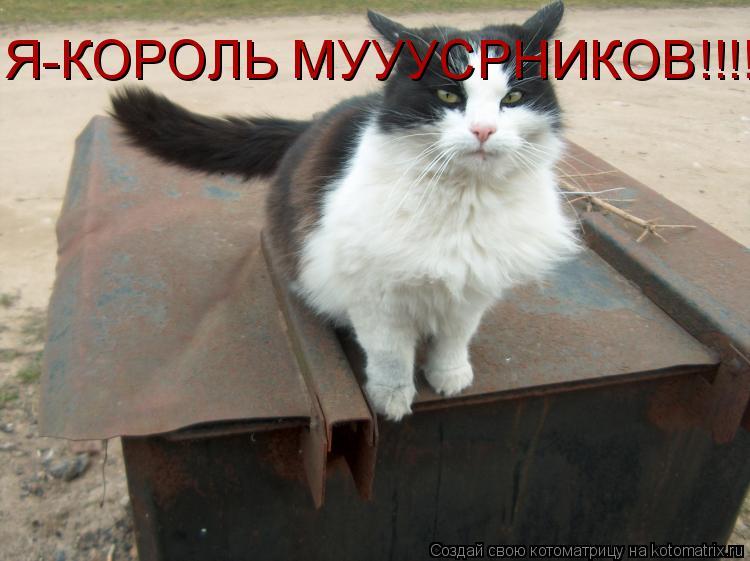 Котоматрица: Я-КОРОЛЬ МУУУСРНИКОВ!!!!