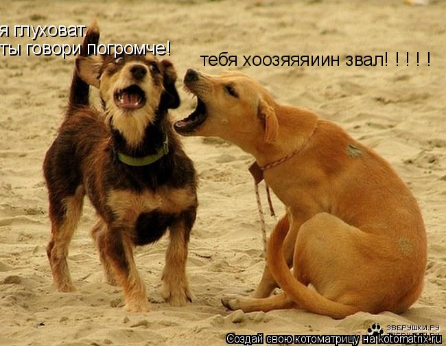 Котоматрица: я глуховат. ты говори погромче! тебя хоозяяяиин звал! ! ! ! !
