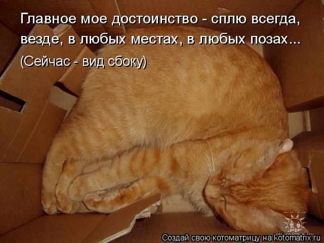 Котоматрица: Главное мое достоинство - сплю всегда, везде, в любых местах, в любых позах... (Сейчас - вид сбоку)