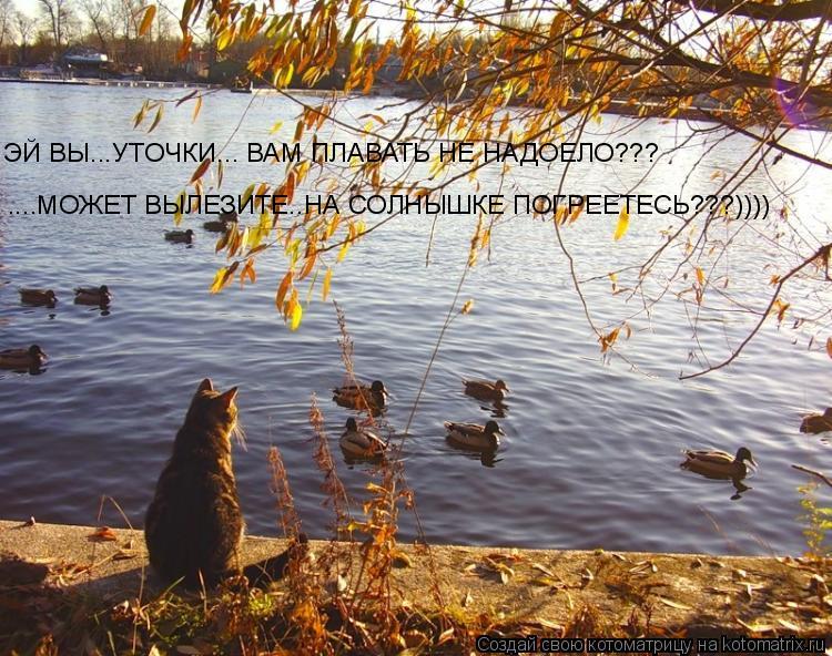 Котоматрица: ЭЙ ВЫ...УТОЧКИ... ВАМ ПЛАВАТЬ НЕ НАДОЕЛО??? ....МОЖЕТ ВЫЛЕЗИТЕ..НА СОЛНЫШКЕ ПОГРЕЕТЕСЬ???))))