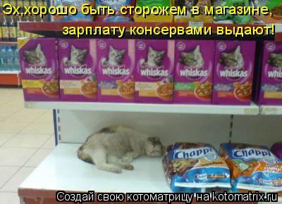 Котоматрица: Эх,хорошо быть сторожем в магазине, зарплату консервами выдают!