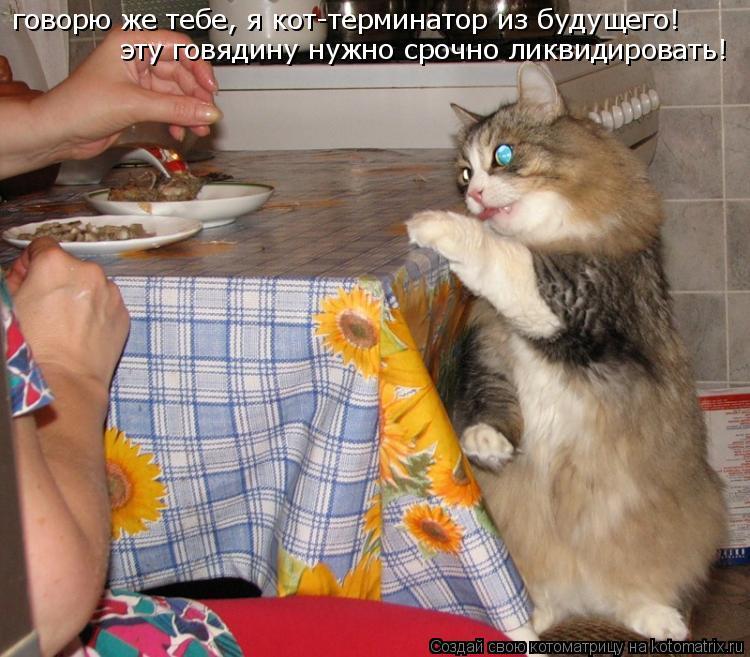 Котоматрица: говорю же тебе, я кот-терминатор из будущего! эту говядину нужно срочно ликвидировать!