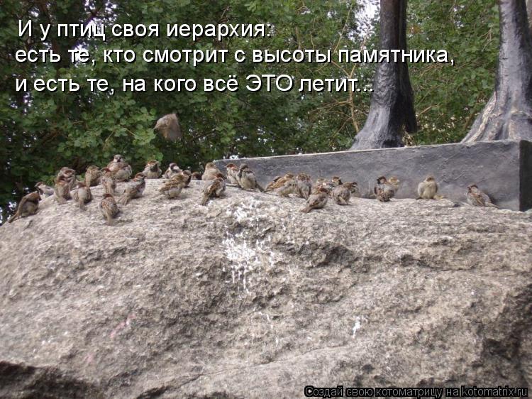 Котоматрица: И у птиц своя иерархия: есть те, кто смотрит с высоты памятника, и есть те, на кого всё ЭТО летит...