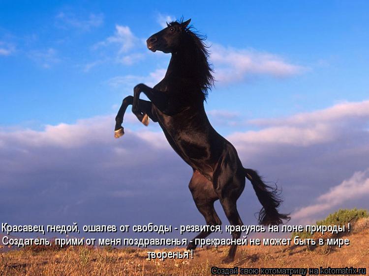 Котоматрица: Красавец гнедой, ошалев от свободы - резвится, красуясь на лоне природы ! Создатель, прими от меня поздравленья - прекрасней не может быть в м