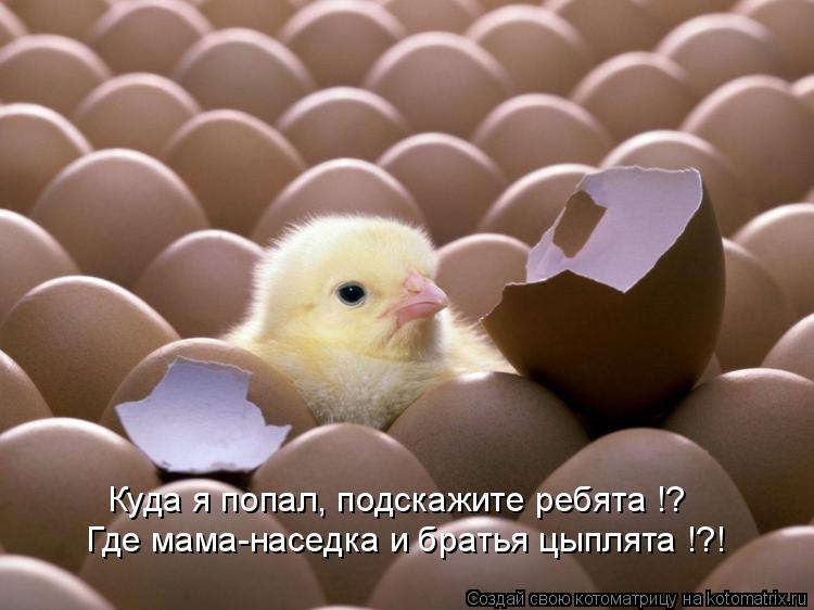 Котоматрица: Где мама-наседка и братья цыплята !?! Куда я попал, подскажите ребята !?
