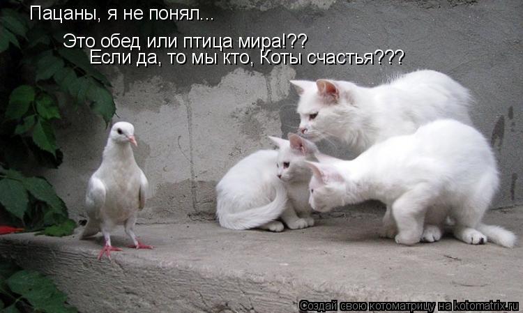 Котоматрица: Пацаны, я не понял... Это обед или птица мира!?? Если да, то мы кто, Коты счастья???