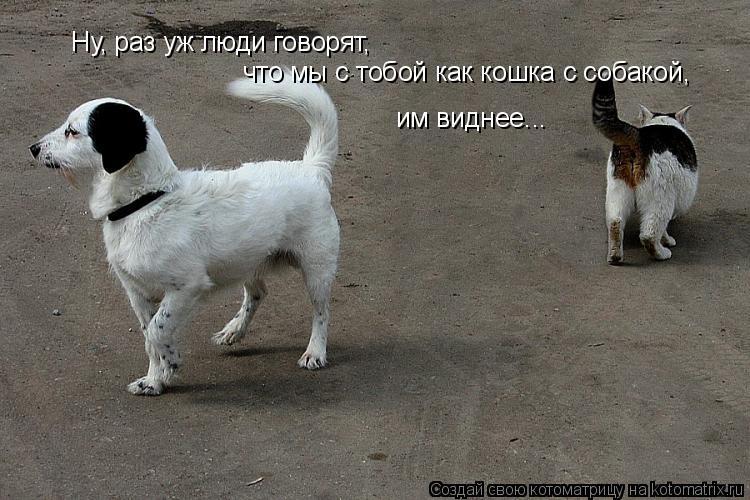 Котоматрица: Ну, раз уж люди говорят, что мы с тобой как кошка с собакой, им виднее...