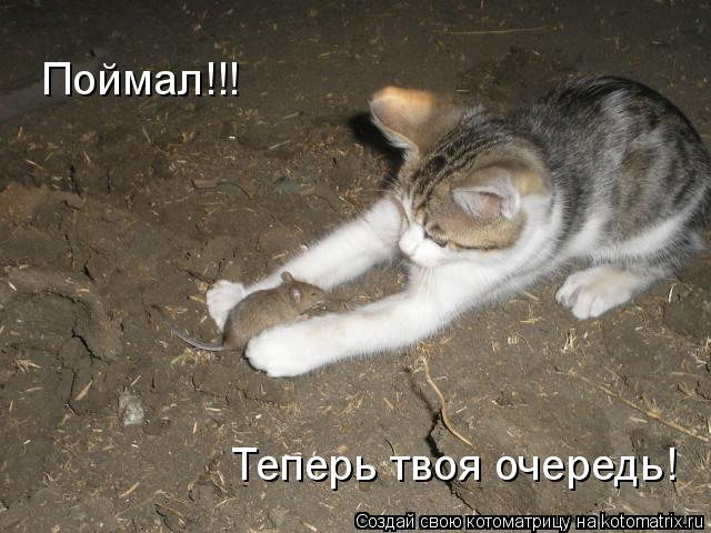 Котоматрица: Поймал!!! Теперь твоя очередь!