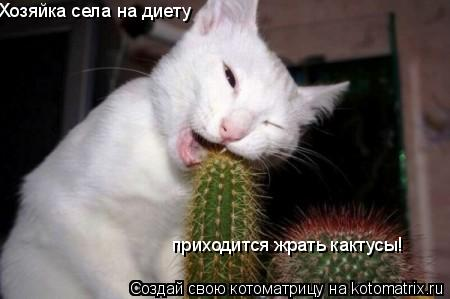 Котоматрица: Хозяйка села на диету  приходится жрать кактусы!