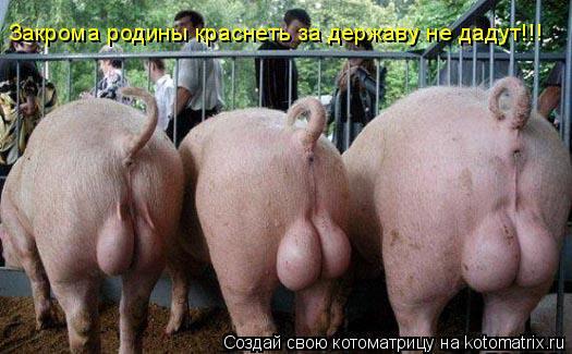 Котоматрица: Закрома родины краснеть за державу не дадут!!!