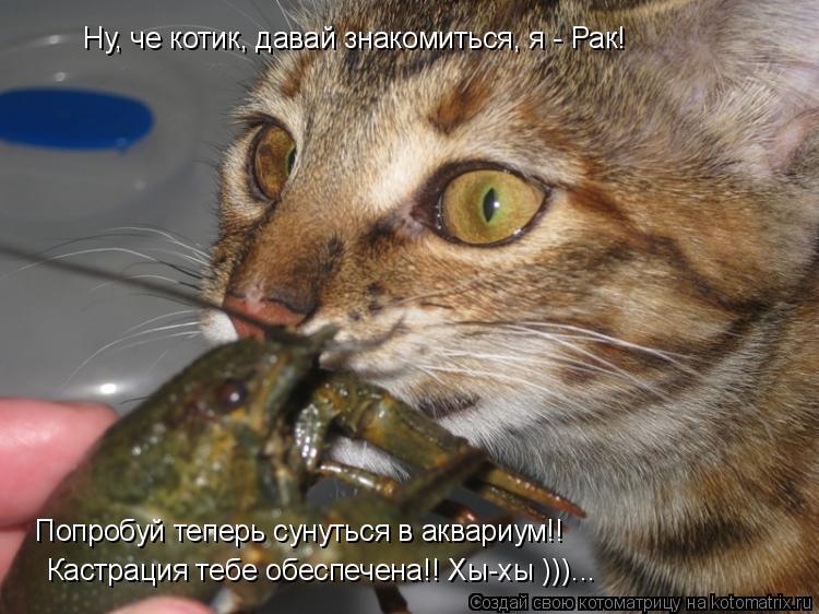 Котоматрица: Ну, че котик, давай знакомиться, я - Рак! Кастрация тебе обеспечена!! Хы-хы )))... Попробуй теперь сунуться в аквариум!!