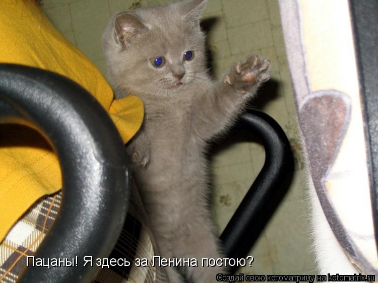 Котоматрица: Пацаны! Я здесь за Ленина постою?