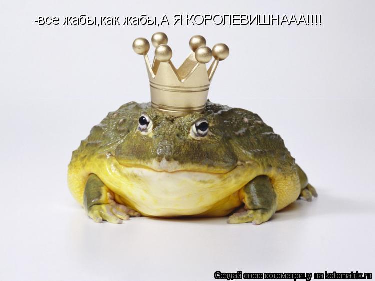 Котоматрица: -все жабы,как жабы,А Я КОРОЛЕВИШНААА!!!!
