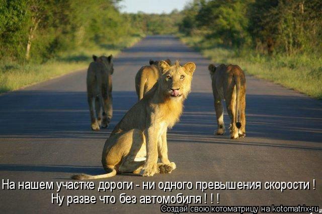 Котоматрица: На нашем участке дороги - ни одного превышения скорости ! Ну разве что без автомобиля ! ! !