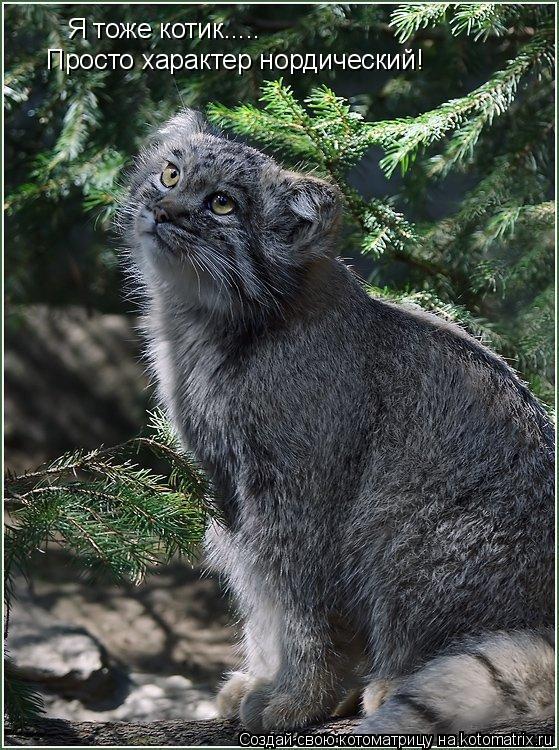 Котоматрица: Я тоже котик..... Просто характер нордический!