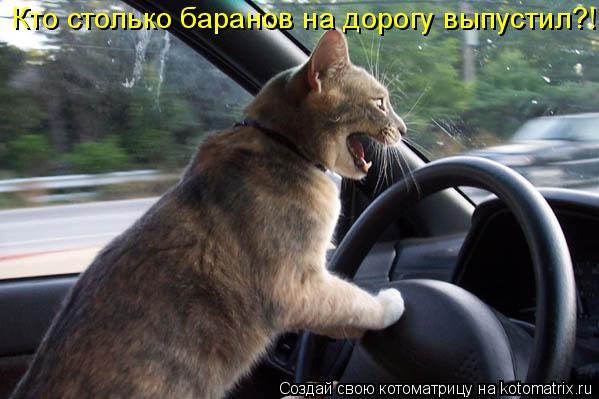 Котоматрица: Кто столько баранов на дорогу выпустил?!