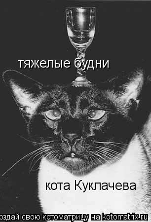 Котоматрица: тяжелые будни  кота Куклачева