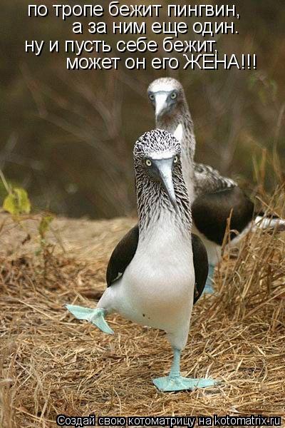 Котоматрица: по тропе бежит пингвин, а за ним еще один. ну и пусть себе бежит, может он его ЖЕНА!!!