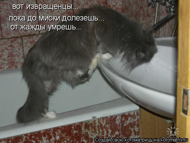 Котоматрица: вот извращенцы... пока до миски долезешь... от жажды умрешь...