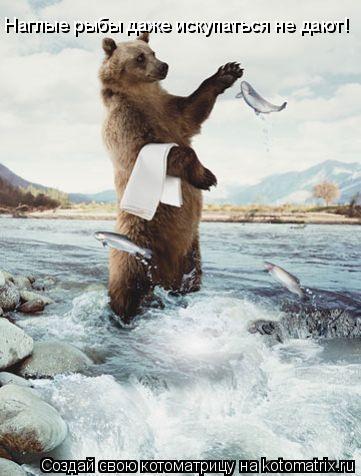 Котоматрица: Наглые рыбы даже искупаться не дают!