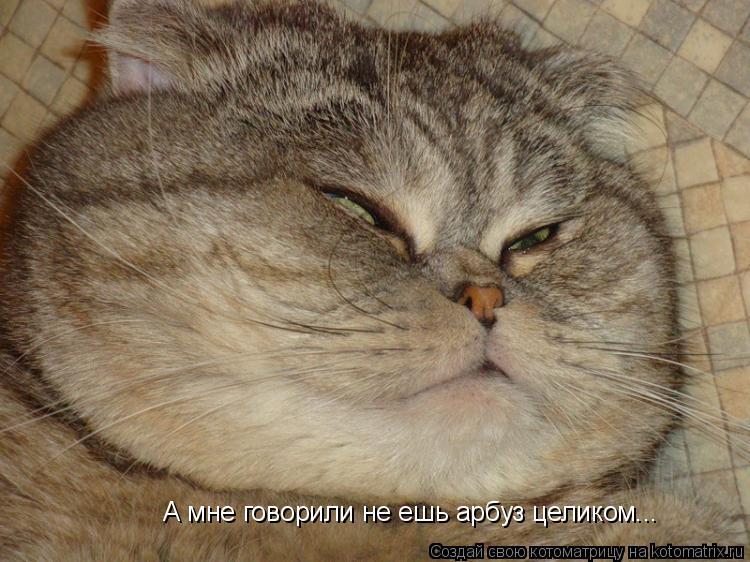 Котоматрица: А мне говорили не ешь арбуз целиком...