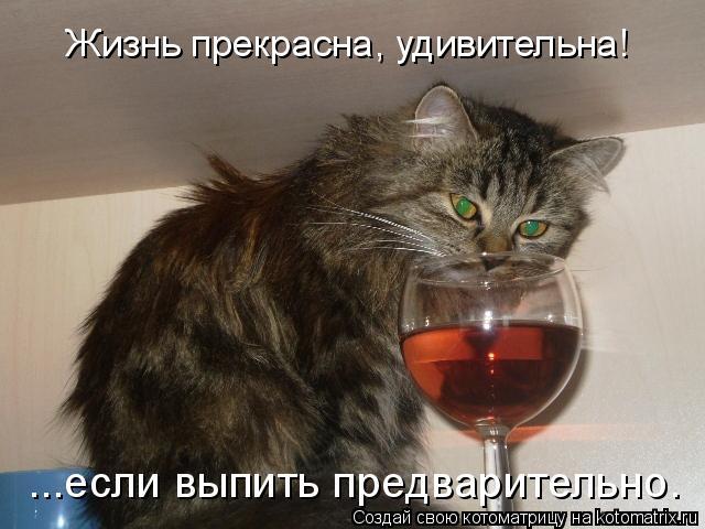 Котоматрица: Жизнь прекрасна, удивительна! ...если выпить предварительно.
