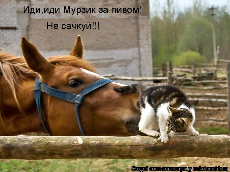 Котоматрица: Иди,иди Мурзик за пивом! Не сачкуй!!!