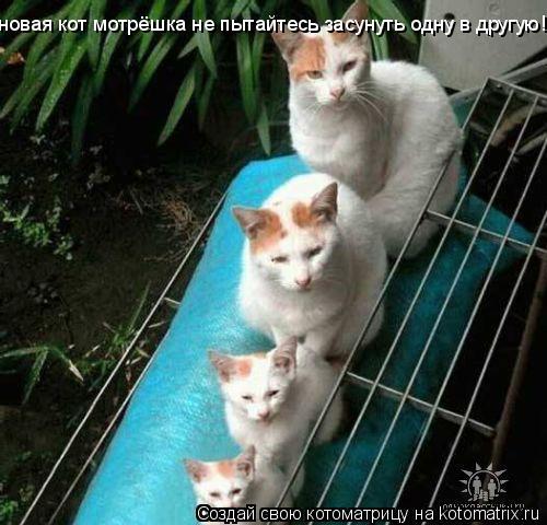 Котоматрица: новая кот мотрёшка не пытайтесь засунуть одну в другую!