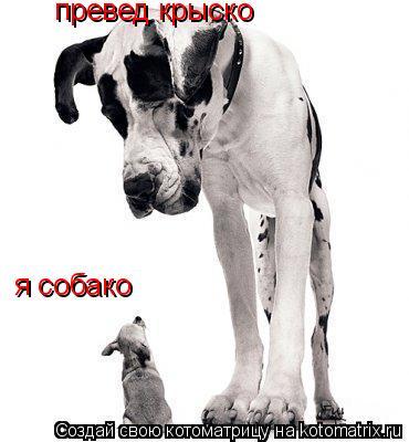 Котоматрица: превед крыско я собако