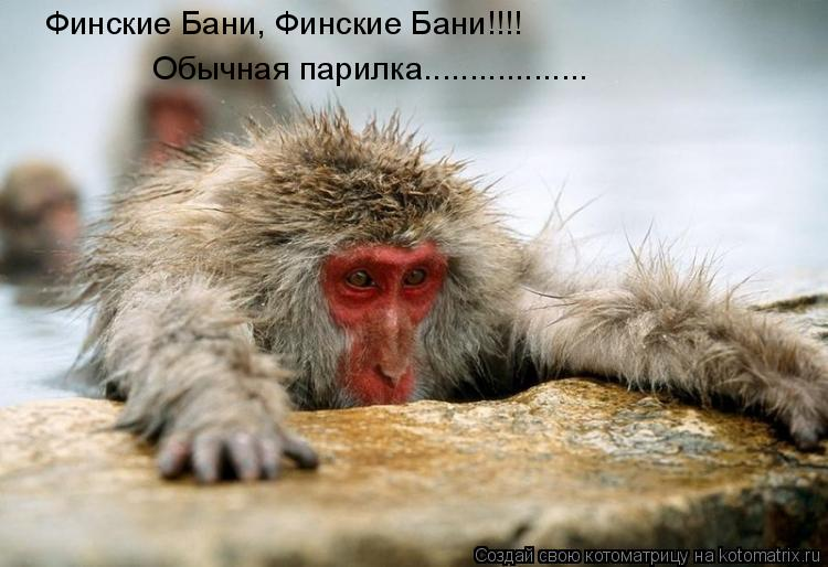 Котоматрица: Финские Бани, Финские Бани!!!! Обычная парилка..................